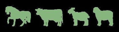 image of livestock animals