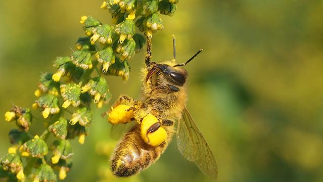 Honey bee on farm
